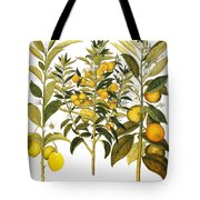 Citron And Orange, 1613 Tote Bag