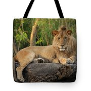 Classic Young Male Tote Bag
