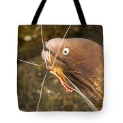 Cleaner Shirmp Cleans Parasites Tote Bag