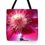 Clematis Bloom.. Tote Bag
