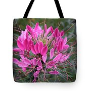 Cleome Spinosa  Tote Bag