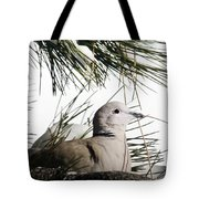 Close Up African Collared Dove Tote Bag