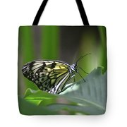 Close Up Look At A Paper Kite Butterfly On Foliage Tote Bag