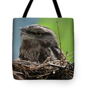 Close Up Look At A Tawny Frogmouth Sitting In A Nest Tote Bag