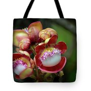 Close-up Macro Of Flower And Fruit Of Cannonball Tree Tote Bag