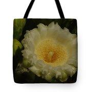 Close Up Of A Cactus Bloom. Tote Bag