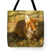 Close-up Of A Fox Resting In A Park Tote Bag