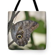 Close Up Of A Pretty Brown Morpho Butterfly  Tote Bag