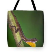 Close-up Of An Anole, Tortuguero, Costa Tote Bag