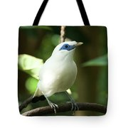 Close-up Of Bali Myna Bird In Trees Tote Bag