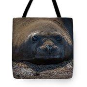 Close-up Of Elephant Seal Looking At Camera Tote Bag