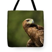 Close-up Of Golden Eagle With Head Turned Tote Bag