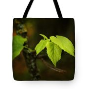 Close Up Of Leaves In Forest Tote Bag