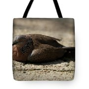 Close-up Of Mottled Pigeon On Sandy Ground Tote Bag
