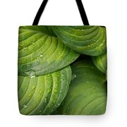 Close-up Of Raindrop On Green Leaves Tote Bag