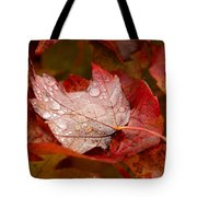 Close-up Of Raindrops On Maple Leaves Tote Bag