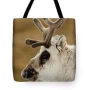 Close-up Of Reindeer Head On Snowy Ridge Tote Bag