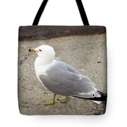 Close-up Of Seagull Tote Bag