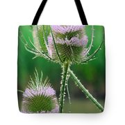 Close Up Of Teasel Blossoms Revealing Tote Bag