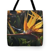 Close Up Photo Of A Bee On A Bird Of Paradise Flower  Tote Bag