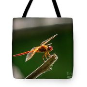 Close Up Red Dragonfly Tote Bag