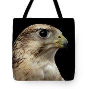 Close-up Saker Falcon, Falco Cherrug, Isolated On Black Background Tote Bag by Sergey Taran