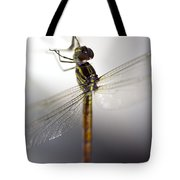 Close Up Shoot Of A Anisoptera Dragonfly Tote Bag