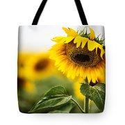 Close Up Single Sunflower In South Dakota Tote Bag