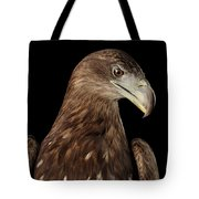 Close-up White-tailed Eagle, Birds Of Prey Isolated On Black Bac Tote Bag