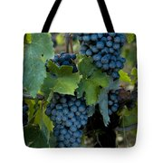 Close View Of Chianti Grapes Growing Tote Bag