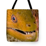 Closeup Of A Giant Moray Eel Tote Bag