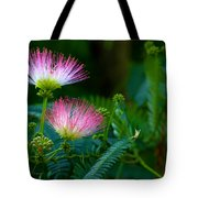 Closeup Of A Mimosa Bloom Tote Bag