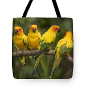 Closeup Of Four Captive Sun Parakeets Tote Bag