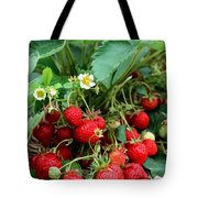 Closeup Of Fresh Organic Strawberries Growing On The Vine Tote Bag