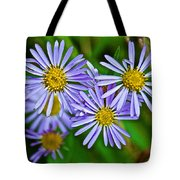 Closeup Of Leafy Bract Asters On Iron Creek Trail In Sawtooth National Wilderness Area-idaho  Tote Bag