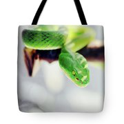 Closeup Of Poisonous Green Snake With Yellow Eyes - Vogels Pit Viper  Tote Bag