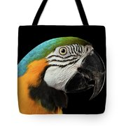 Closeup Portrait Of A Blue And Yellow Macaw Parrot Face Isolated On Black Background Tote Bag