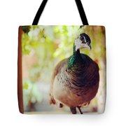 Closeup Portrait Of A Peafowl Tote Bag