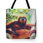 Closeup Portrait Of A Wild Sumatran Adult Female Orangutan Climbing Up The Tree And Holding A Baby Tote Bag