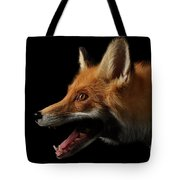 Closeup Portrait Of Red Fox In Profile Isolated On Black  Tote Bag