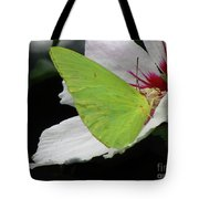 Cloudless Giant Sulphur Butterfly  Tote Bag