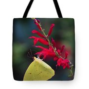 Cloudless Sulphur And Pineapple Sage Tote Bag