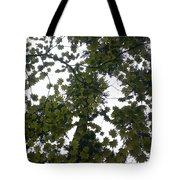 Cloudy Skies Through Maple Tote Bag