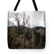 Cloudy Sky's Bare Trees Tote Bag