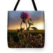 Clover At Sunset Tote Bag by Viviana Nadowski