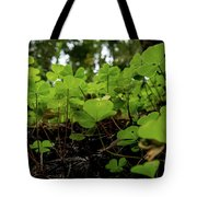 Clover In Montgomery Woods State Natural Reserve Tote Bag