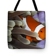 Clown Anemonefish, Indonesia Tote Bag