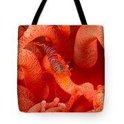Clown Shrimp Tote Bag