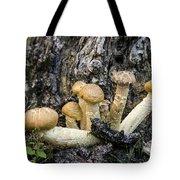 Cluster Of Mushroms In Front Of Stump Tote Bag