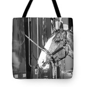 Clydesdale Shine Tote Bag